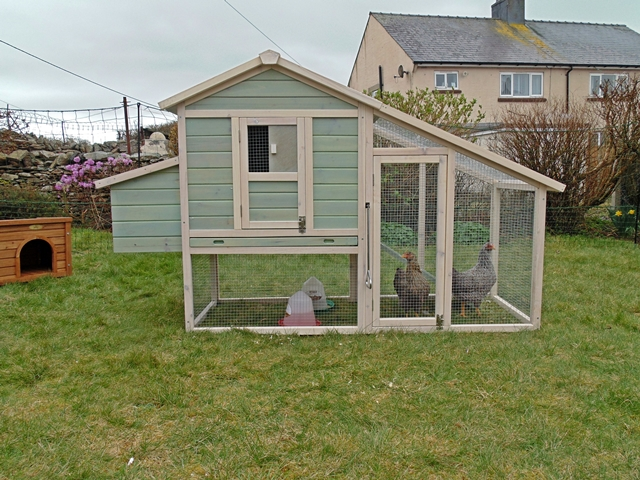 Back Garden Hens in a Wooden Chicken Coop