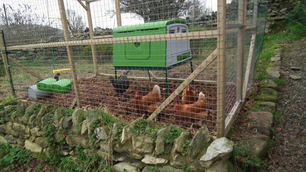 Hens in Fox Proof Run