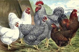 Turkeys on sale near me chat