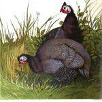 Origins of Guinea Fowl