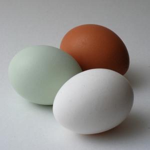 Multiple Coloured Hens Eggs - Blue, Brown & White