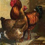Partridge Cochin (Shanghae) Hen & Cockerel