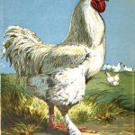 History & Origin of Cochin Chickens