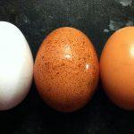 Pale Eggs - Egg Shell Colour