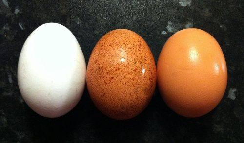 Pale Eggs Why Egg Shell Colour Can Change