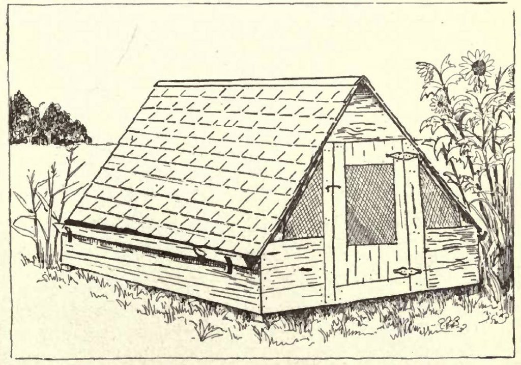 Colony Poultry House