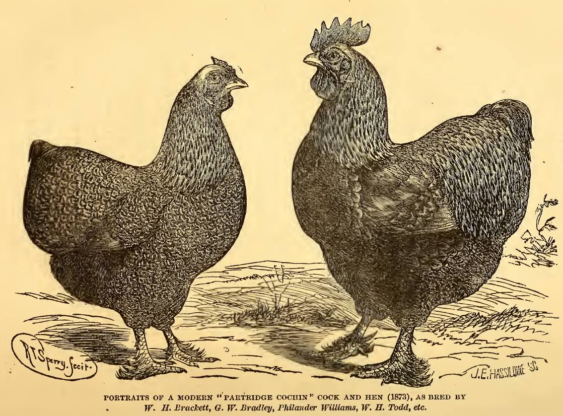 General information about breeding poultry: a selection of sites