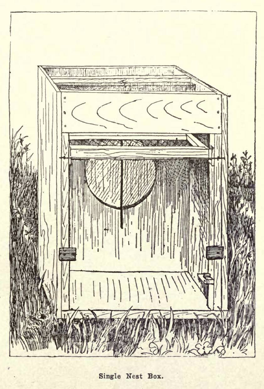 How to Build a Trap Nest Box for Hens  Free Plan