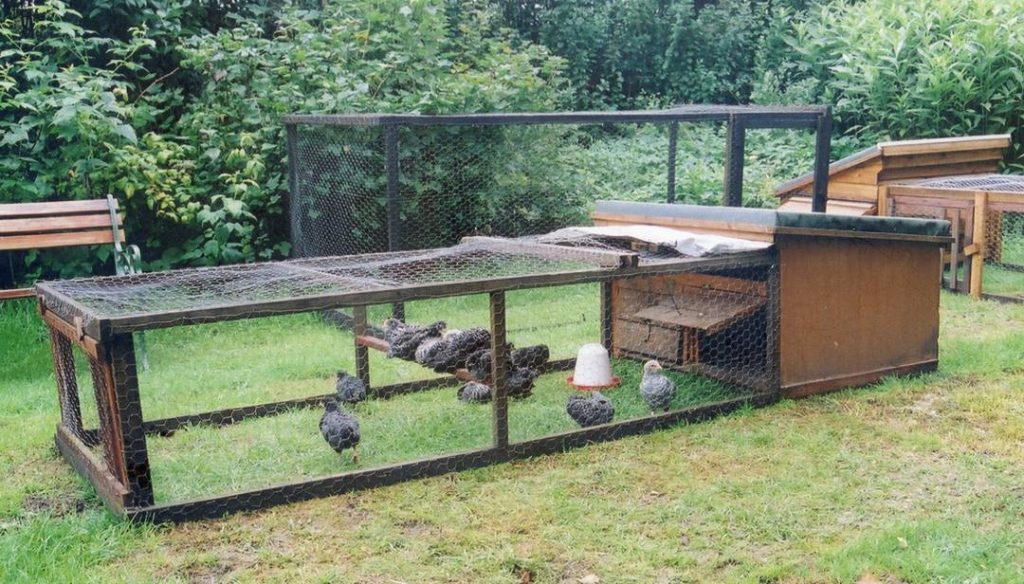 Home Made Poultry House