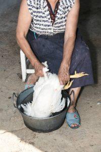 Plucking a Chicken
