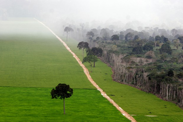 Soybean Plantation Amazon