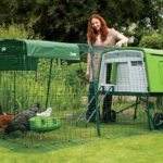 The Omlet Eglu Cube Review – Plastic Chicken Coop for 10 Chickens