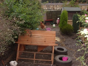 Small urban garden with back garden chickens & ducks.
