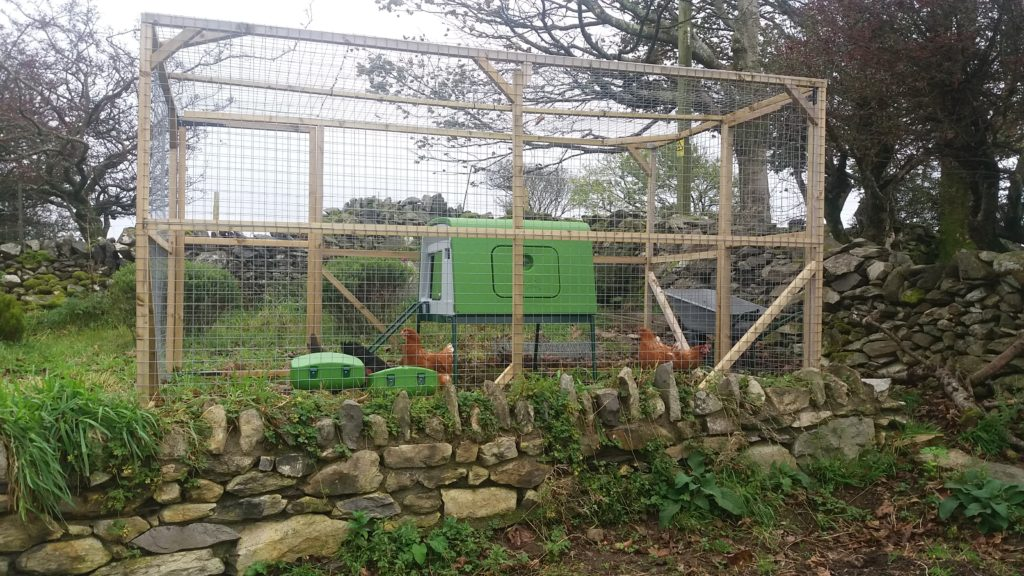 Hens in a poultry run with an eglu coop.