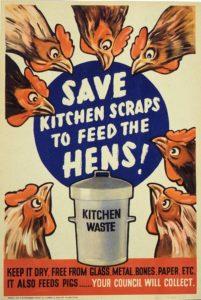 Feeding Scraps Chickens