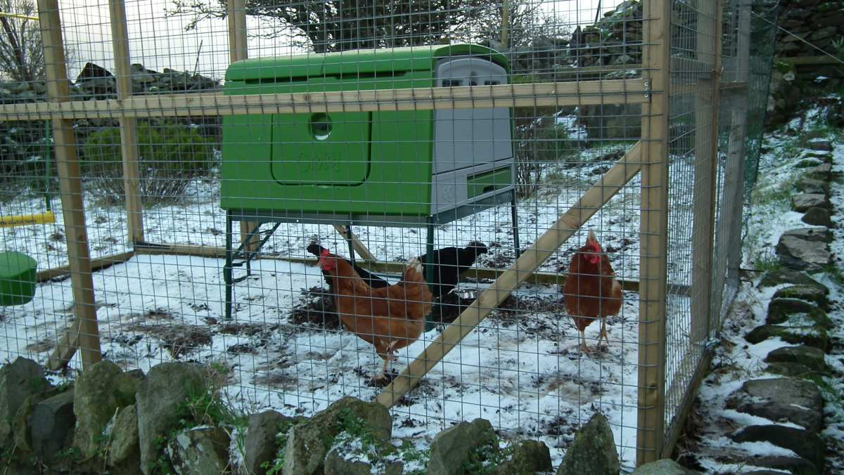 Snow Chickens