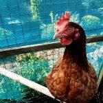 "Favourite Chicks plus Omlet's ""Hentertainment"" Bundle Review"