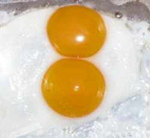 Double Yolked Egg