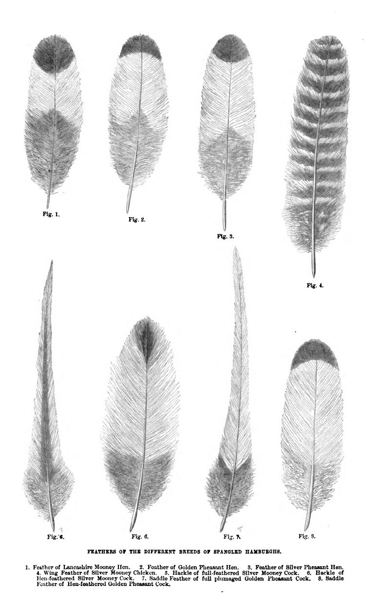 Feather Types