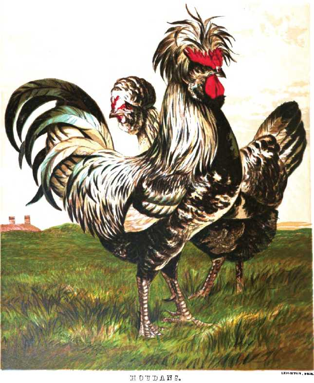 Houdan Chickens