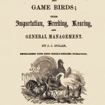Ornamental, Aquatic & Domestic Fowl by J J Nolan 1850