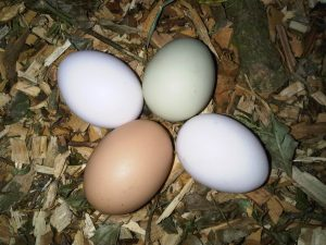 Nutritiona Value of Eggs - Four eggs on the ground