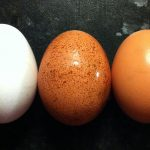Pale Eggs - Egg Shell Colour