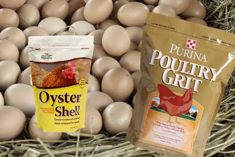 Crushed Oyster Shell Chicken Grit