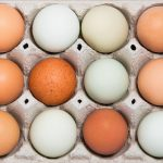 Egg Shell Colour Chart by Breed of Hen