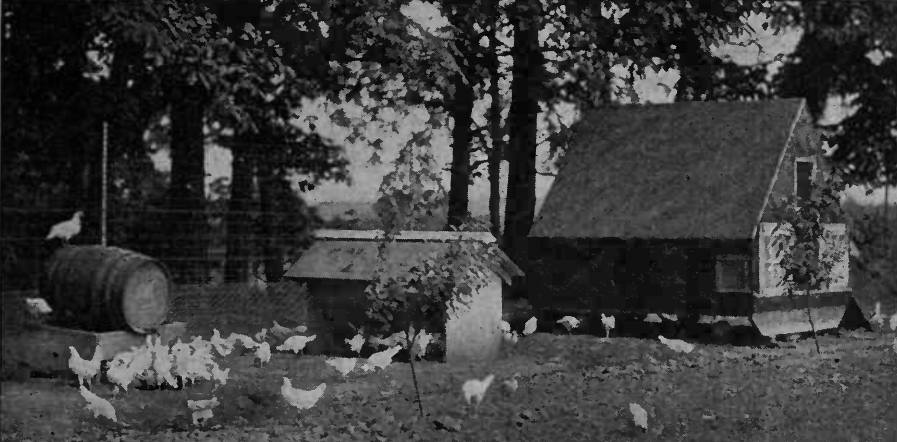 Poultry House Location