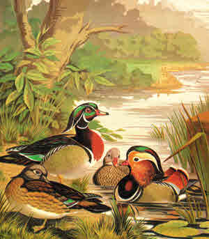 Old Ducks Picture