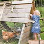 The Boughton Ark Hen Coop – Foresham Cottage Ark Review