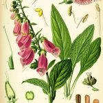 Poisonous Plants Toxic to Poultry – North America