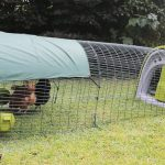Omlet Plastic Chicken Coop Review – The Eglu Chicken Coop Review