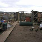 Keeping Poultry on Allotments – Legal & Planning Permission