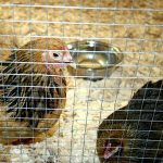 Which Weld Mesh is Best for Poultry Runs
